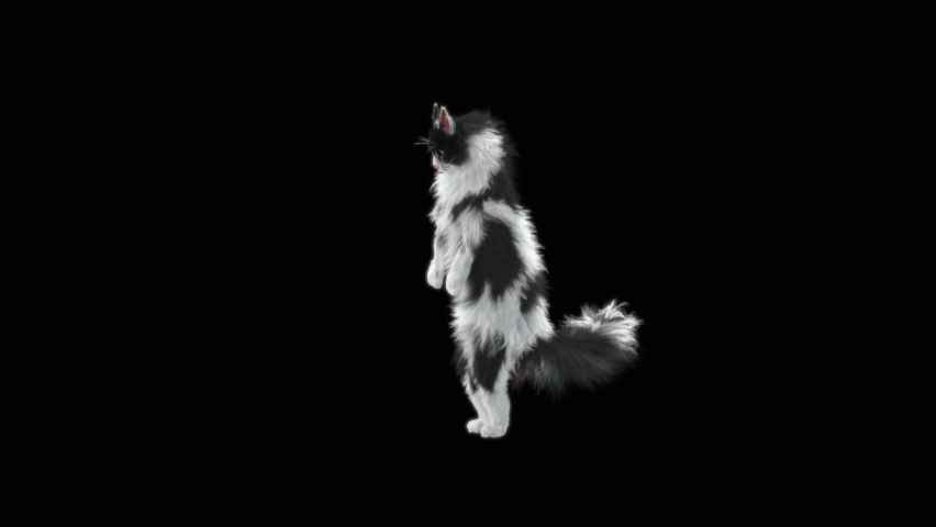 Cat Dancing CG fur. 3d rendering, Animation Loop. Included at the end of the clip with Alpha matte. | Shutterstock HD Video #1065614569
