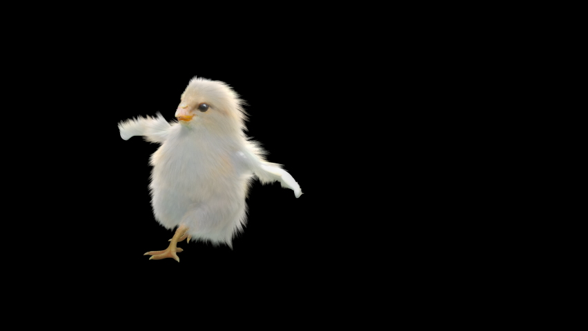 Baby Chickens Dance CG fur 3d rendering animal realistic composition 3d mapping cartoon, Animation Loop, Included in the end of the clip with Alpha matte.  | Shutterstock HD Video #1065614572