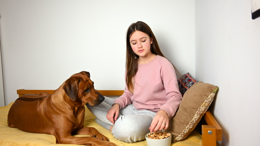 Young girl giving her dog some treats. Teenage girl and Rhodesian Ridgeback dog sitting on bed at home and eating biscuits treats. Pet love concept. | Shutterstock HD Video #1065626743