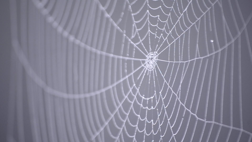 Spiderweb covered morning dew on summer morning close up. Spider web swaying in wind on gray blurred background. Dew drops on web close up. Cobweb hanging on metal old wire. Nature, natural background | Shutterstock HD Video #1065676258