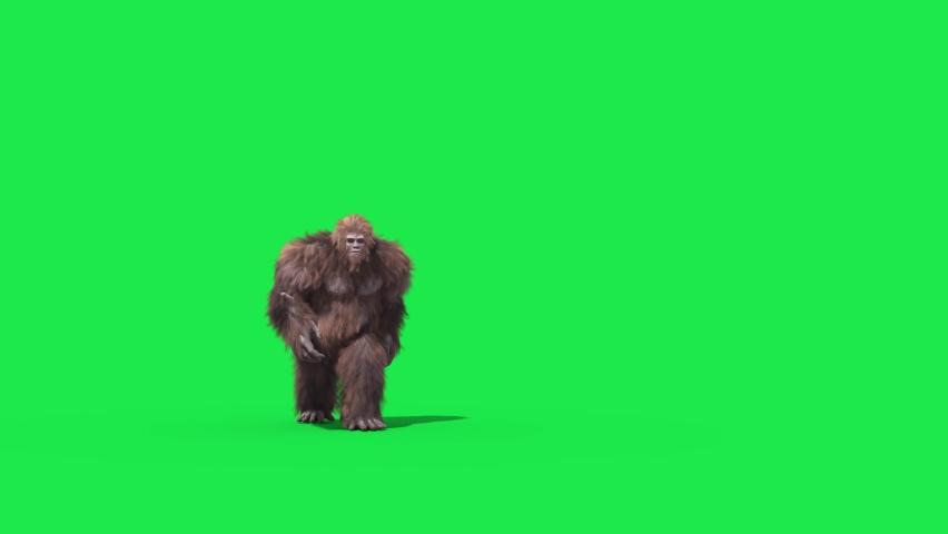 Green Screen Bigfoot Yeti Walk Front Real Fur 3D Rendering Animation 4K   Shutterstock HD Video #1065698179