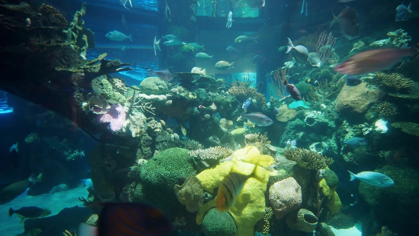 Many fish swimming in the Aquarium at Las Vegas, Nevada | Shutterstock HD Video #1065861340