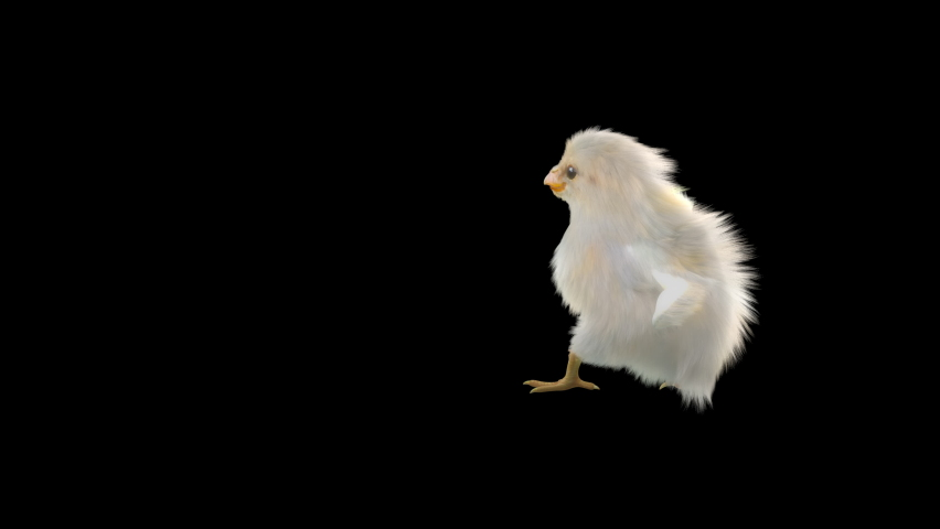 Baby Chickens Dance CG fur 3d rendering animal realistic composition 3d mapping cartoon, Animation Loop, Included in the end of the clip with Alpha matte. | Shutterstock HD Video #1065894340