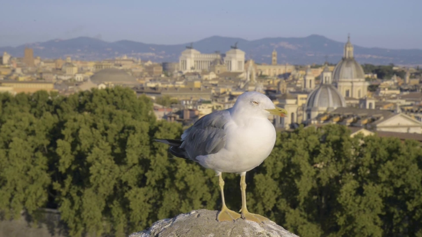 Rome, Italy, Relaxing Seagull and View from Castel Sant'Angelo on Altare della Patria (Piazza Venezia) and Pantheon - 1080p 24fps - Soft Background Blur, Static Frame, Summer | Shutterstock HD Video #1065899848