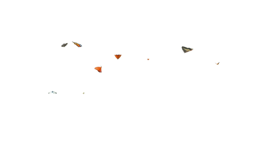 Colorful butterflies flying loop random in the scene on white and black background. 3D rendering(Alpha matte) | Shutterstock HD Video #1066000003