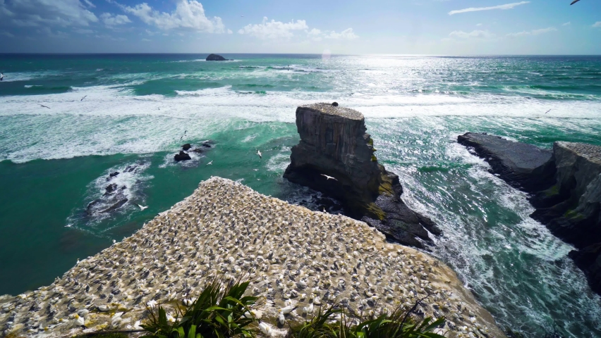 Muriwai is an impressive coastline with cliff-top trails to a huge gannet colony, with easy access and viewing platforms that let you get up close. | Shutterstock HD Video #1066052323