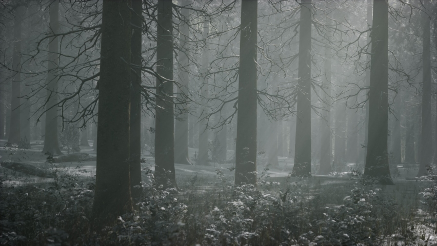 Winter snow-covered forest on a cloudy day | Shutterstock HD Video #1066054522