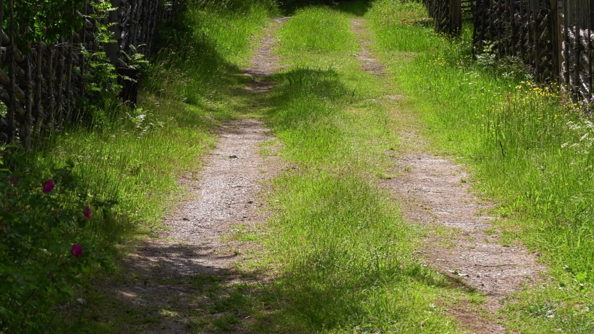 Old country road with insects flying in the grass. Summertime on the old Swedish farm | Shutterstock HD Video #1066055437