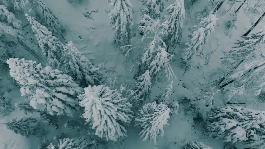 Aerial view of a frozen forest with snow covered trees at winter. Winter forest, snow pine trees landscape. | Shutterstock HD Video #1066055689