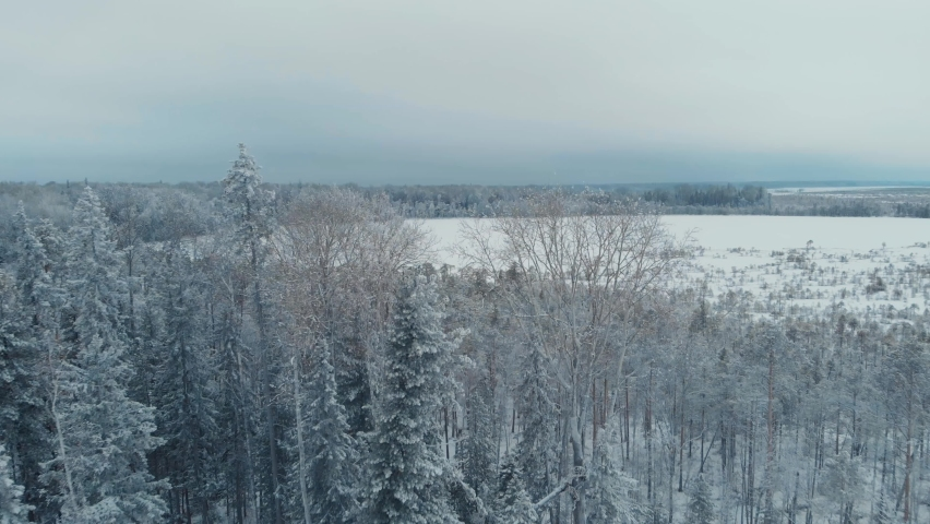 Flying a drone over the frozen trees in the snow of a taiga area, touching the treetops | Shutterstock HD Video #1066056058