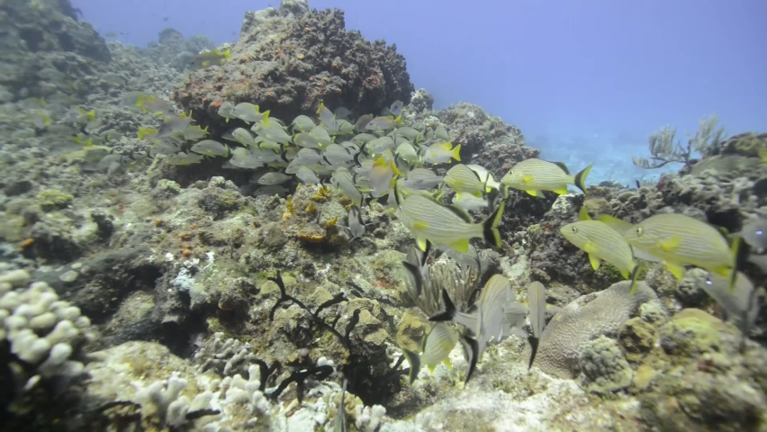 School of fish swimming in cozumel reef   Shutterstock HD Video #1066174582