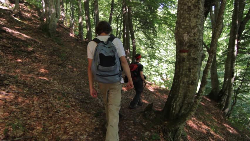 Hikers walking in the wood 2 | Shutterstock HD Video #10663769