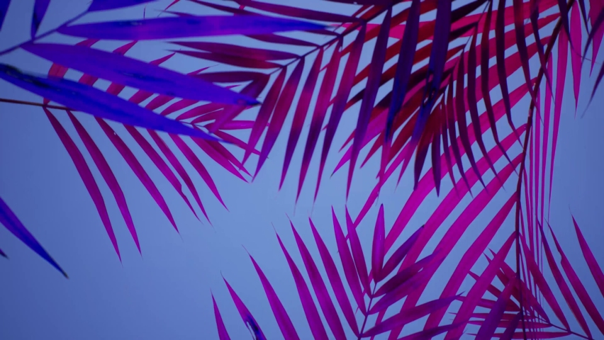 Vacation. VJ loop, animated footage.Tropical animated background. Palms on the beach. Beach Party. Pink and Violet.
