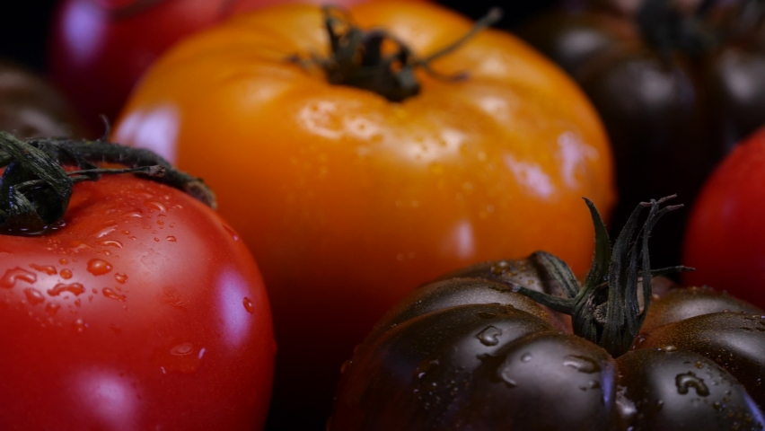 Different kinds of tomatoes rotating on a black background. Fresh and firm tomato in 4K. Restaurant, groceries store or agriculture promo.