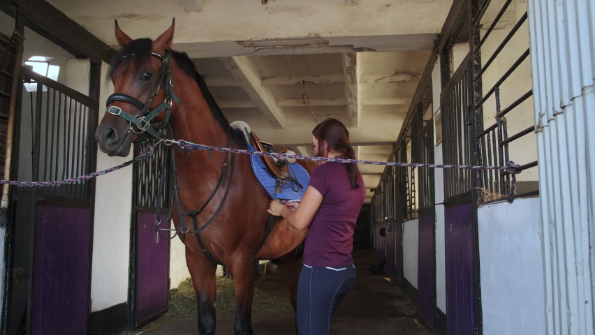 Sporty female is fastening saddle on brown horse standing in corridor of stable. Equine tied to the grate of a stall. Care, preparing for riding. Slow motion   Shutterstock HD Video #1067294980