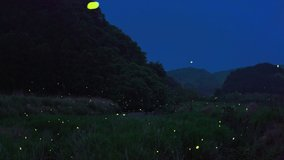 a video of many fireflies dancing around.