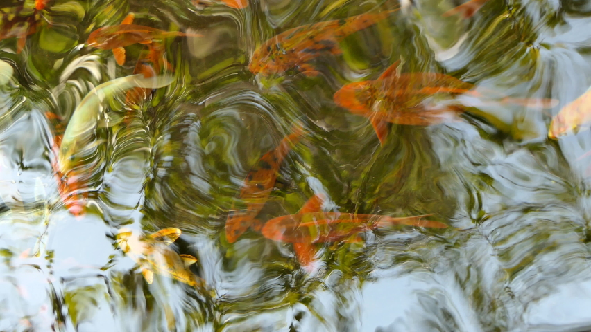 Water surface and fish in the water. | Shutterstock HD Video #1068111620