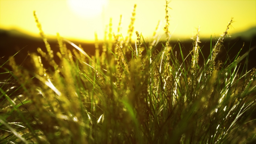 Green grass on hills at sunset | Shutterstock HD Video #1068118121