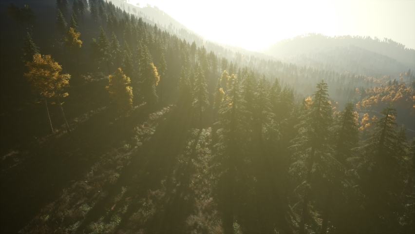 Aerial Drone View Flight over pine tree forest in Mountain at sunset | Shutterstock HD Video #1068118145