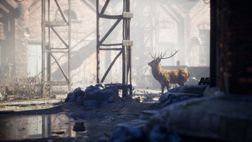 Wild deer rooming around the streets in abandoned city | Shutterstock HD Video #1068118208