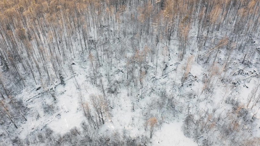 Long flight over yellow snow covered forest at sunset. Aerial angle view in 4K | Shutterstock HD Video #1068118436
