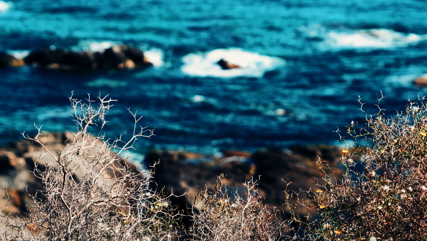 Dry plant, bush swaying in wind against blue sea water, rocky coast. Mediterranean nature. Andalucia Spain. | Shutterstock HD Video #1068121355