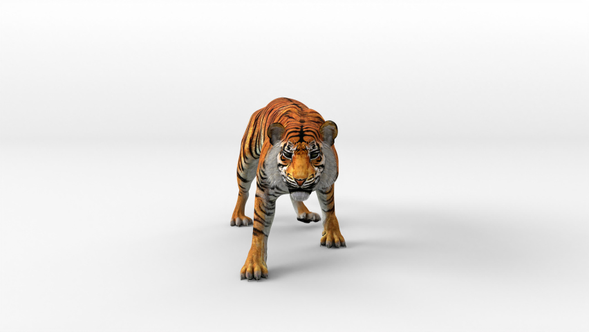 Tiger bengal movement leaping attack to camera with 3d rendering include alpha path. | Shutterstock HD Video #1068190430