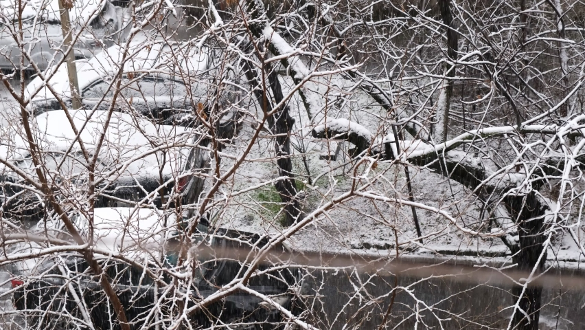Snow in the city. snow covers tree branches against the background of the street and parked cars