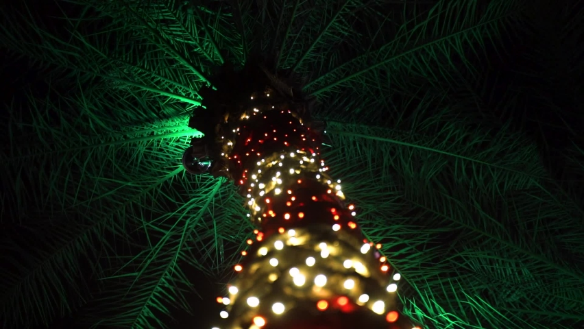 Holiday Palm Tree Wrapped in Xmas Lights - Christmas in the Bahamas (Slow Motion)   Shutterstock HD Video #1068619823