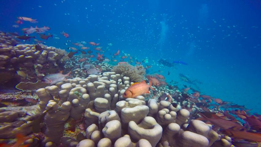 Exciting diving off Mafia Island. Tanzania. Africa. | Shutterstock HD Video #1068879290