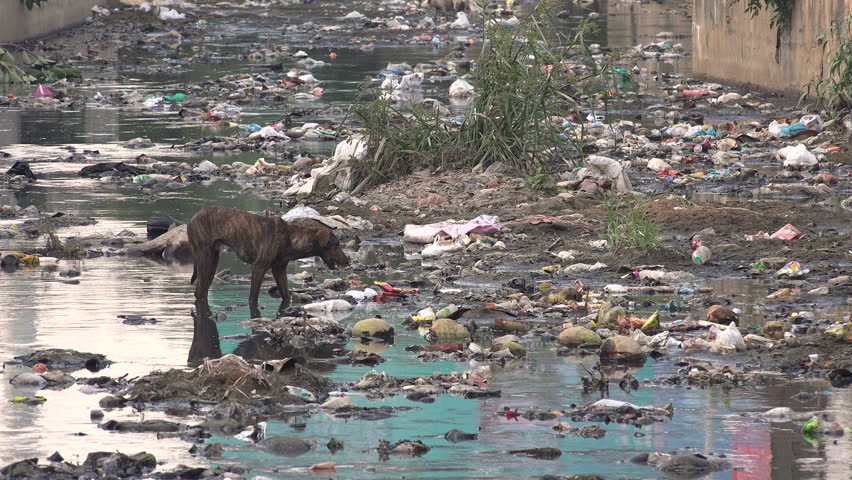 A stray dog searches for food in a polluted stream in the Indian city Bangalore.