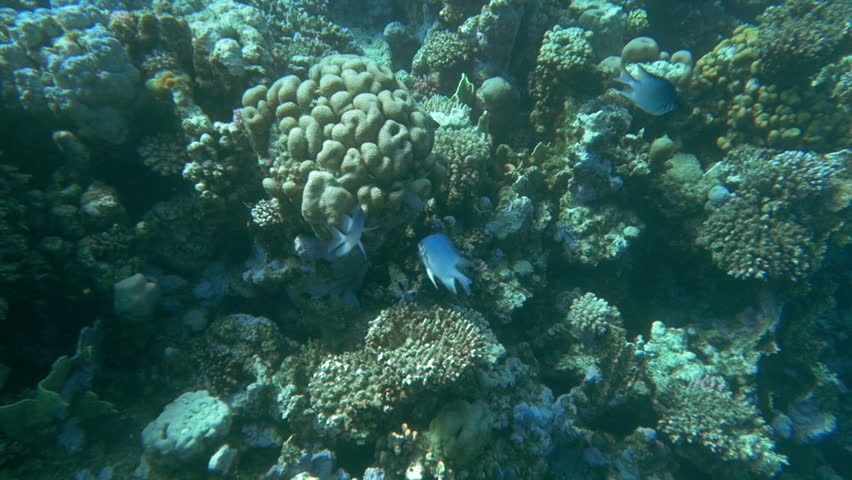 Slow motion shot of a coral reef and fishes living nearby. #10690745