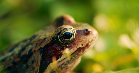 close up frog in the wild hid among leaves and sticks macro shooting
