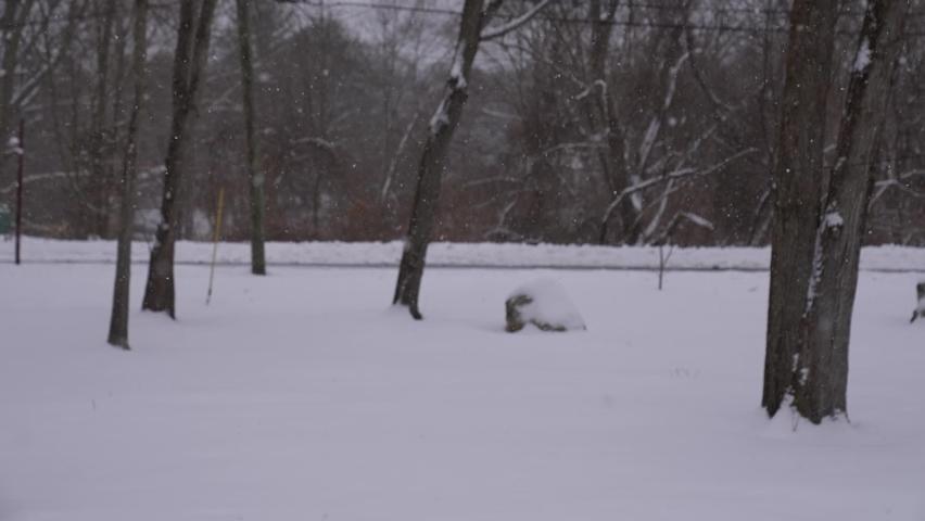 Snowfall. Snowy yard full of trees. Winter in New England.  | Shutterstock HD Video #1069180450
