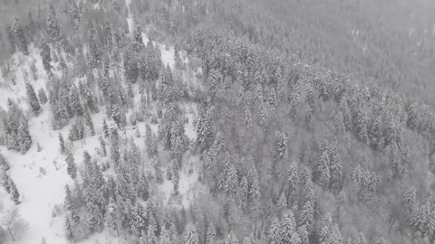 Aerial view of a frozen forest with snow covered trees at winter. Flight above winter forest in Bakuriani, Georgia