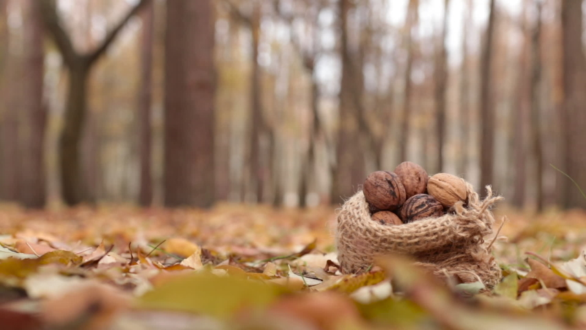 A squirrel takes a walnut from a small bag. Animal, rodent, fauna, food, nature, knitted bag, feed | Shutterstock HD Video #1070191858