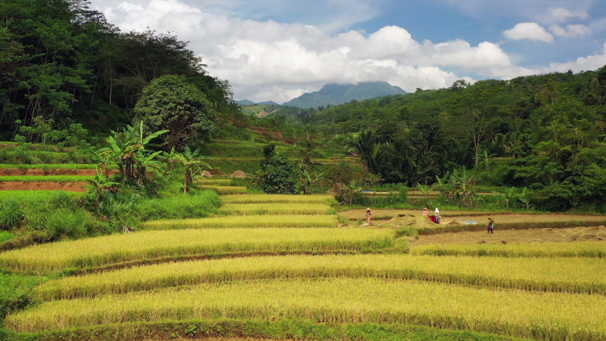 Panoramic view of terraced rice fields with the activities of farmers Royalty-Free Stock Footage #1070330071