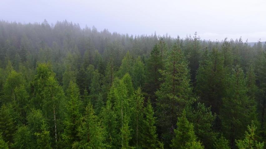 Aerial view near treetops of foggy, polar woods, dark, misty day, in Sweden- rising, low, drone shot | Shutterstock HD Video #1070334214