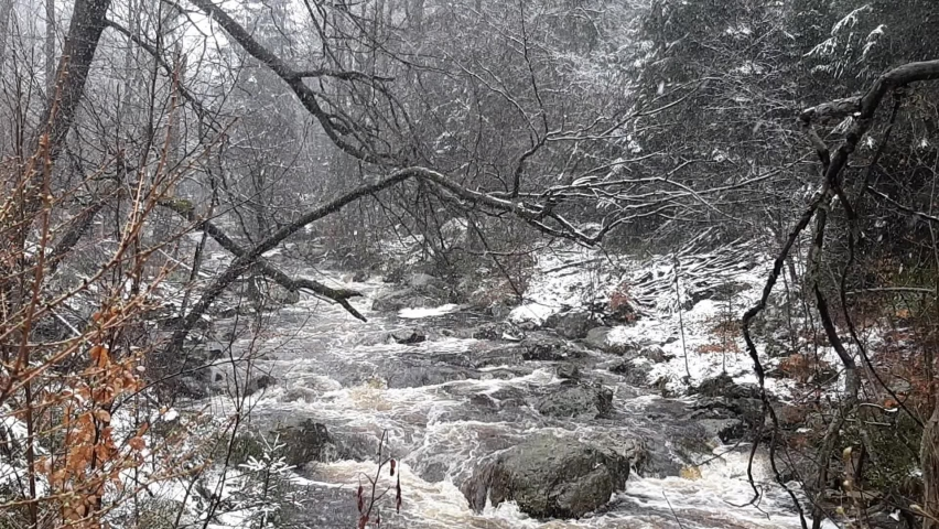 Wild forest river during snowfall in winter. Hoegne in Ardennes, Belgium. Beauty in nature.  Royalty-Free Stock Footage #1070513068