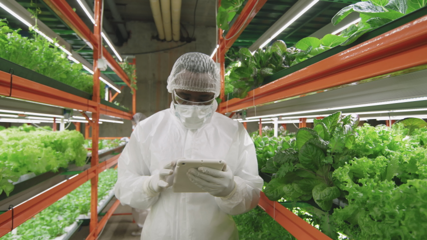 Slow-motion medium shot of afro-american male agronomic engineer in protective workwear using digital tablet and then looking at camera standing at contemporary vertical farm | Shutterstock HD Video #1070632201