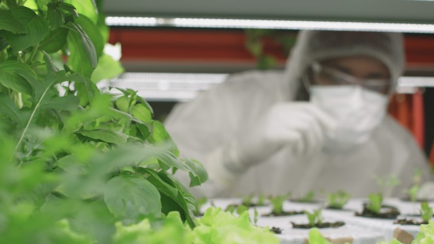 PAN close up with slowmo of professional agronomic researcher or engineer in protective workwear examining growing lettuce seedlings in small pots working in vertical farm | Shutterstock HD Video #1070632543