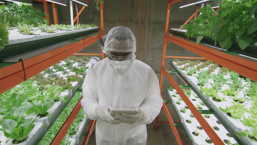 High-angle dollying-out medium shot with slowmo of male afro-american agronomic engineer in protective workwear using digital tablet while walking along vertical farm examining green seedlings | Shutterstock HD Video #1070633764