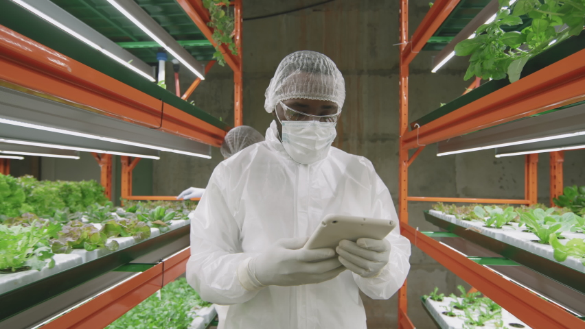 Slow-motion medium track shot of male african-american agronomic engineer in protective coveralls and mask examining growing green seedlings of lettuce or spinach of various sorts in vertical farm | Shutterstock HD Video #1070634418