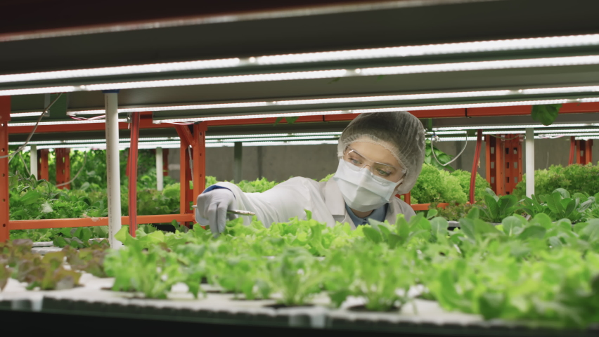 Waist-up shot of young female agronomic engineer in white lab coat and protective mask examining green seedlings of various sorts making notes in tablet working in vertical farm indoors | Shutterstock HD Video #1070636221