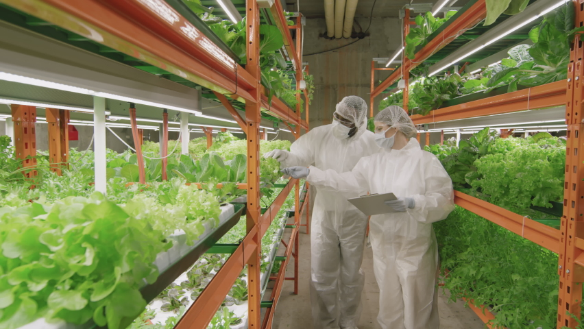 Slow-motion medium shot of two agronomic professionals in protective clothing examining bright green seedlings growing inside contemporary vertical farm | Shutterstock HD Video #1070639098