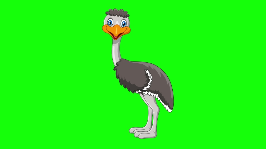 Ostrich runs face looking at the screen happily 2d animation screen green | Shutterstock HD Video #1070750653