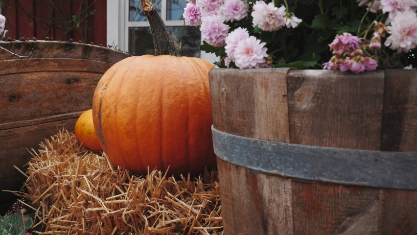 View of thanksgiving pumpkins background | Shutterstock HD Video #1070753161