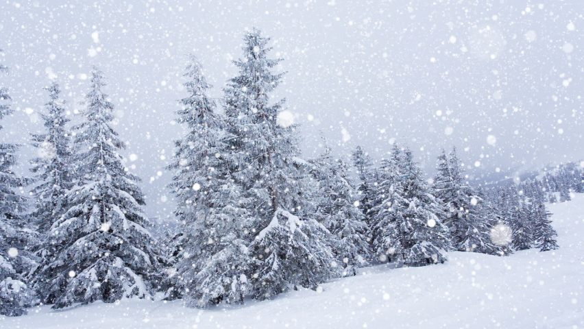 Beautiful fluffy snow on tree branches. Snow falls beautifully from the spruce branches. Winter fairy tale, trees in snow captivity. Snowing winter footage video | Shutterstock HD Video #1070778769