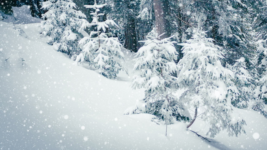 Beautiful fluffy snow on tree branches. Snow falls beautifully from the spruce branches. Winter fairy tale, trees in snow captivity. Snowing winter footage video | Shutterstock HD Video #1070778775
