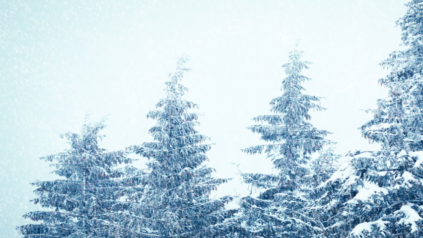 Snowfall in winter in the forest, soft snowy christmas morning with falling snow. Winter landscape. Snow covered trees | Shutterstock HD Video #1070778778